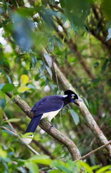 IguazuFalls_0360cc